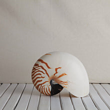 Load image into Gallery viewer, Nautilus Striped Shell - Magnolia Lane