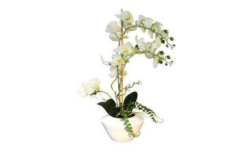 Distinctify Phalaenopsis Flower Bowl