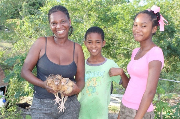 Haiti Projects Chicken and Goat Giveaway