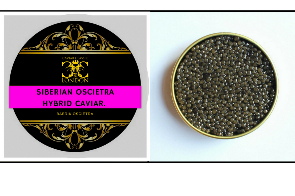 New exciting caviar. The Siberian Oscietra Hybrid Caviar.