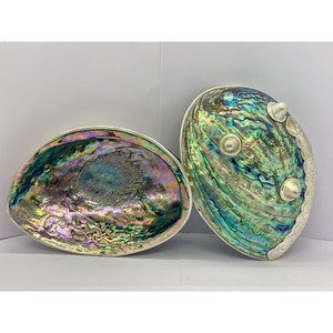 POLISHED GREEN ABALONE SHELL. - Caviar Classic London