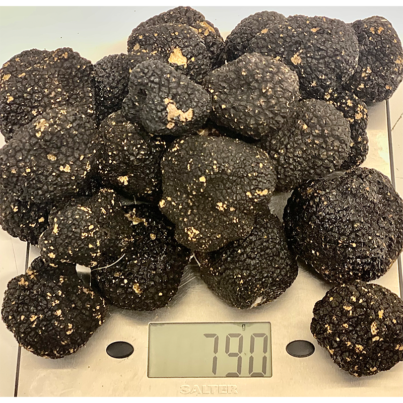 (Uncinatum) Autumn Truffles 50-200 gr. 20% off - Caviar Classic London
