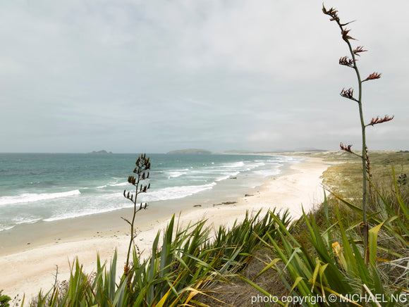 Henderson Bay - Northland New Zealand