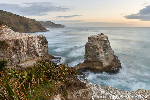 Muriwai - New Zealand