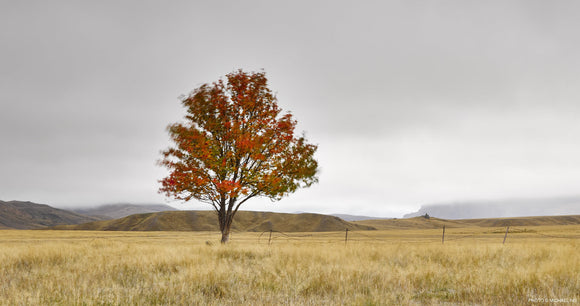NEVIS VALLEY RED TREE