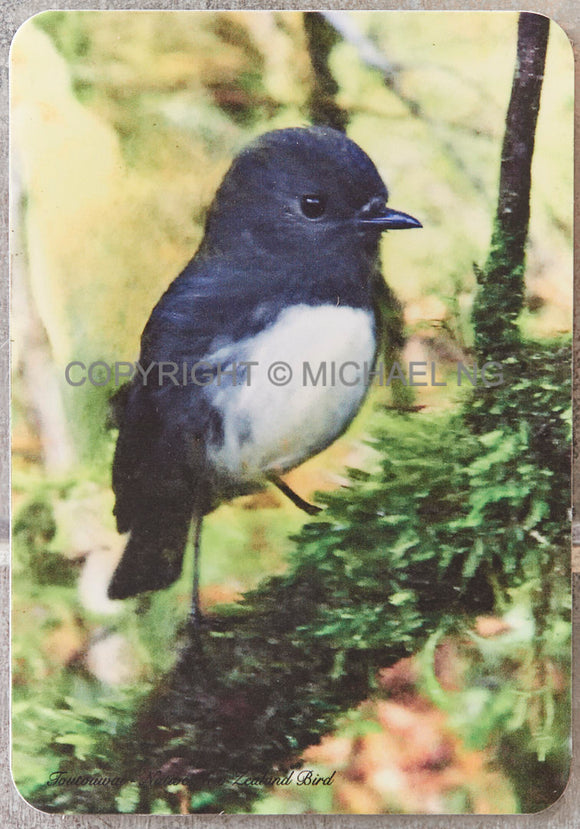 Fridge Art - South Island Robin #1