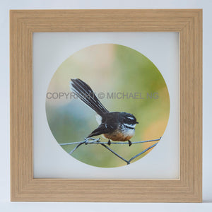 Native Bird Squares - Fantail #2