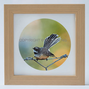 Native Bird Squares - Fantail #3