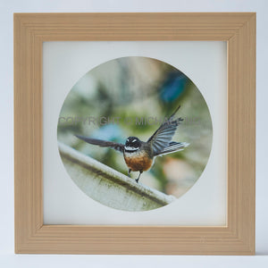 Native Bird Squares - Fantail #4