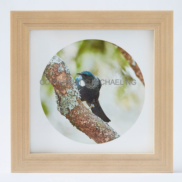 Native Bird Squares - Tui #8