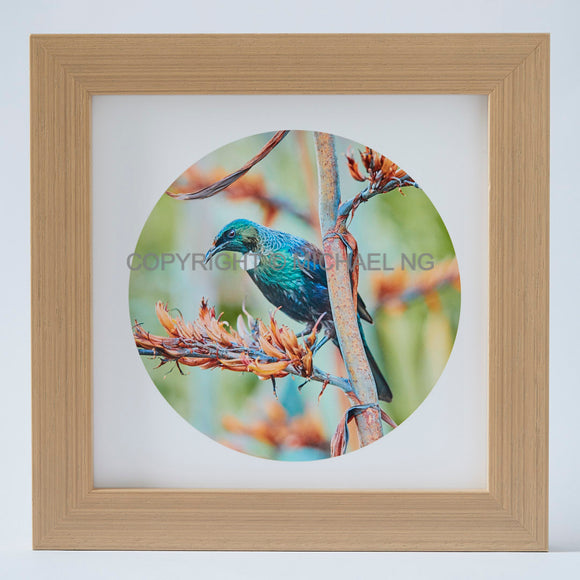 Native Bird Squares - Tui #10