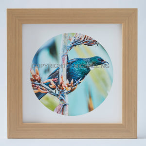 Native Bird Squares - Tui #11