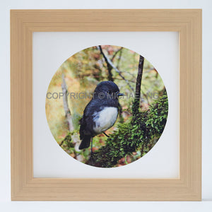 Native Bird Squares - South Island Robin
