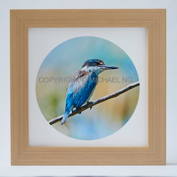 Native Bird Squares - Kingfisher #1