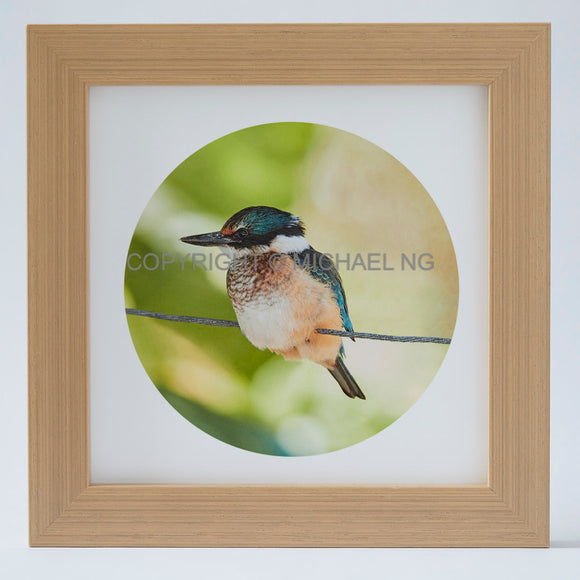 Native Bird Squares - Kingfisher #2