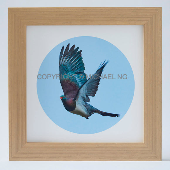 Native Bird Squares - Wood Pigeon #1