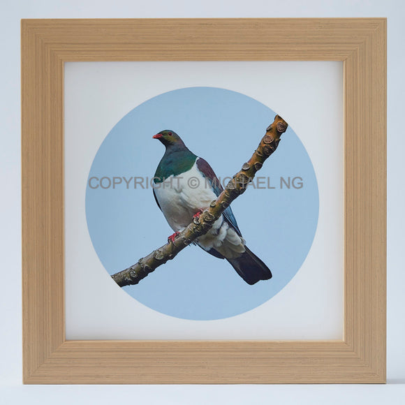 Native Bird Squares - Wood Pigeon #2