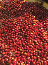 Ethiopia Abana Estate Washed - African Single Origin