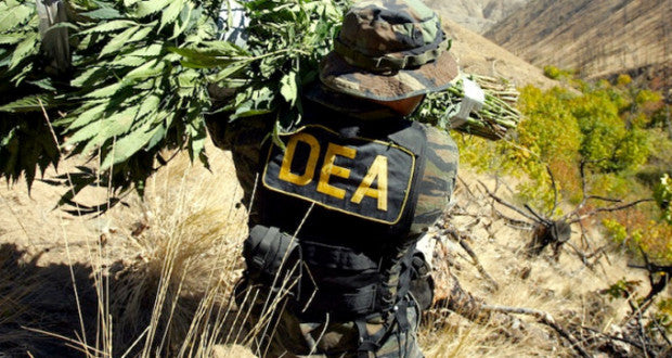 The War on Drugs: The 'root' of all evil.