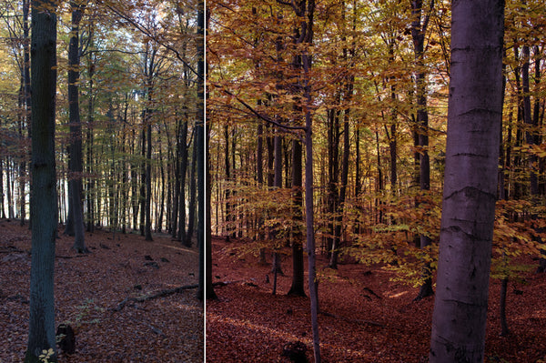 Forest Colors – Lightroom Presets | Presetbase
