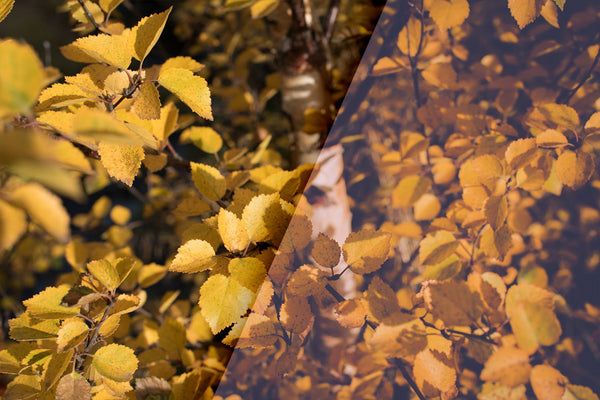 Vintage Autumn Colors – FREE Lightroom Presets - Lightroom-Presets by Presetbase - 2