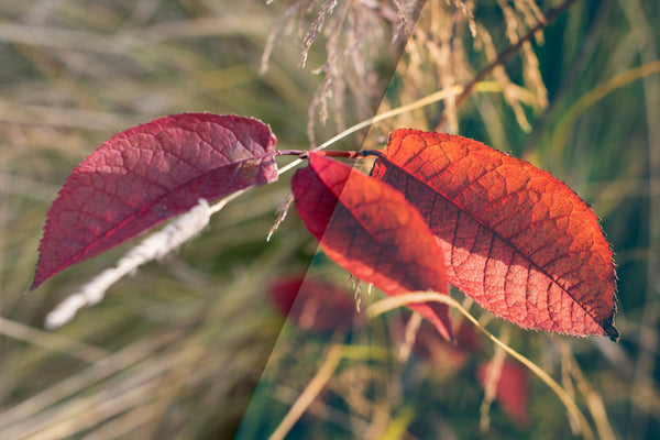 Vintage Autumn Colors – FREE Lightroom Presets - Lightroom-Presets by Presetbase - 6