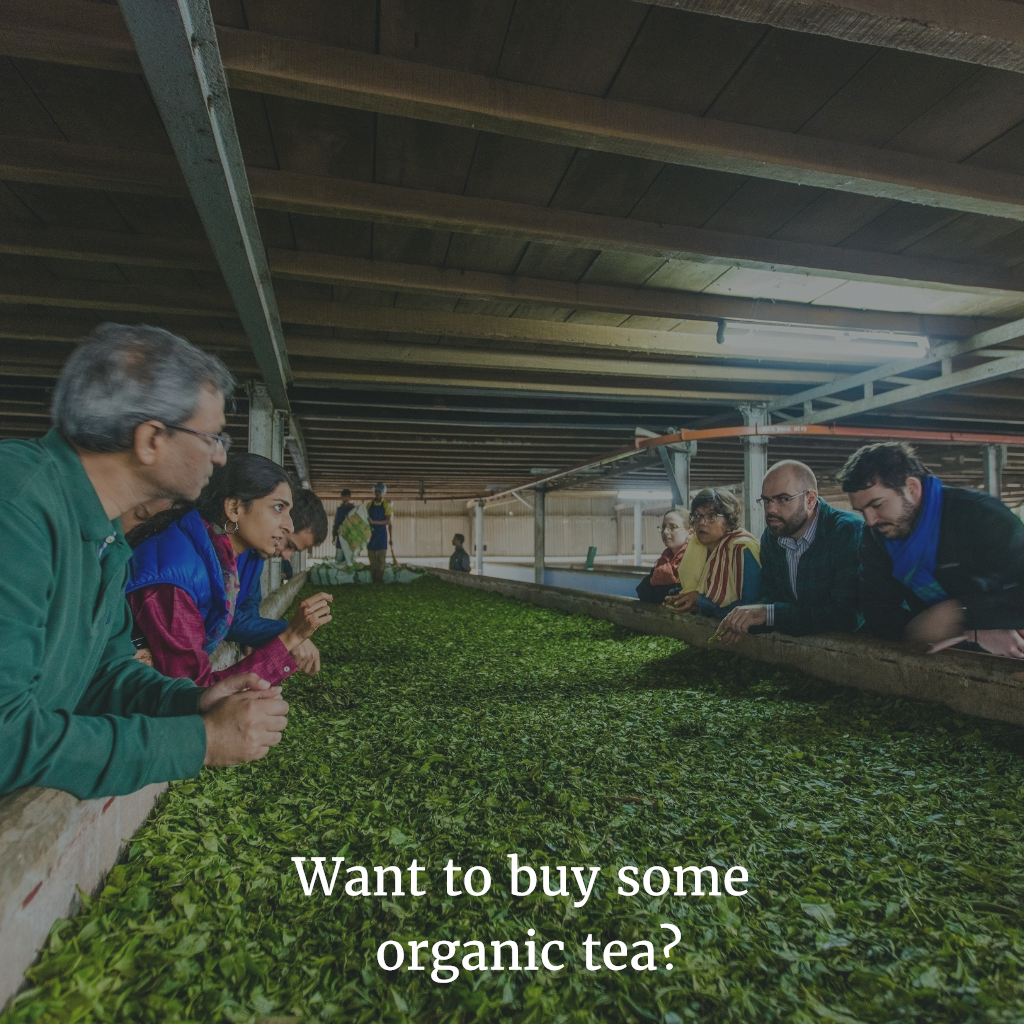 Marketing, Marketing, Marketing Organic Tea!
