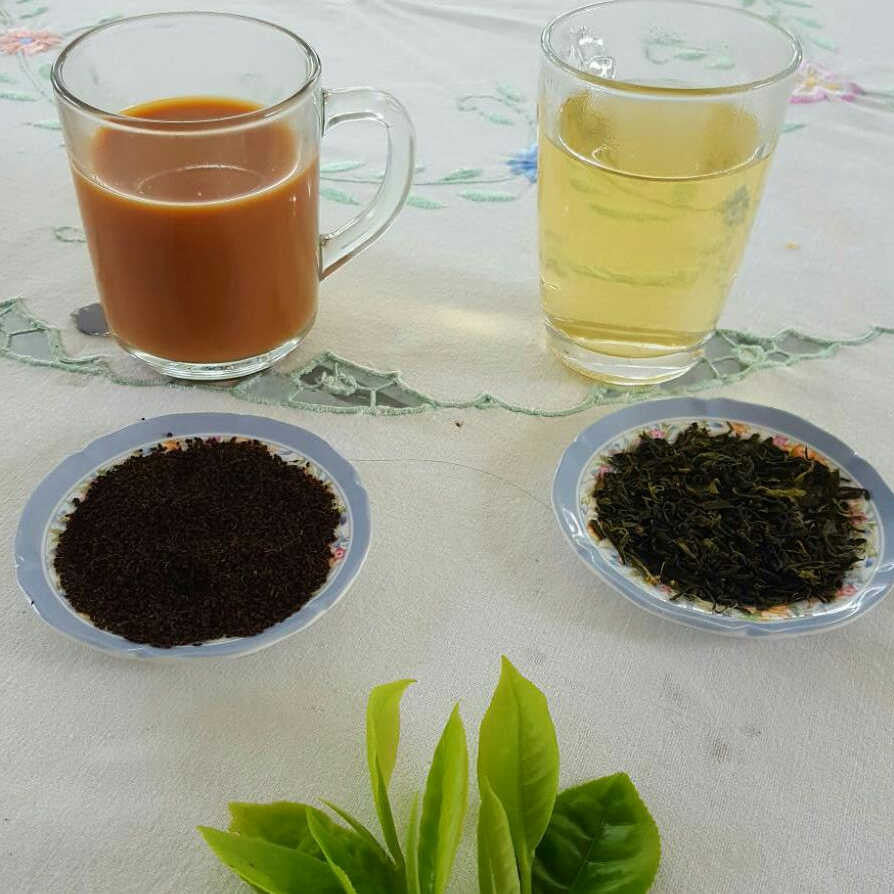 The Secret Difference Between Black and Green Tea