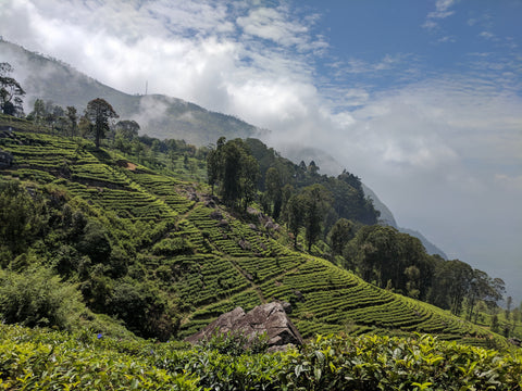 More Slopes of tea in Ella Sri Lanka