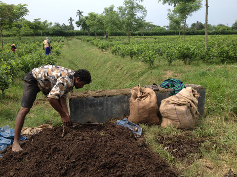 Making organic compost on Chota Tingrai Tea Esate