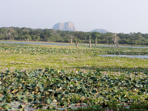 Marsh in Yala National Park