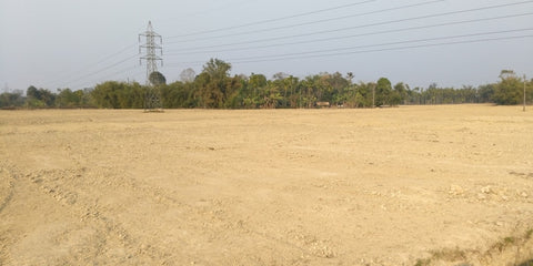 Leveled Land, ready for planting in MP 9, Chota Tingrai Tea Estate