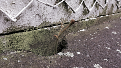 Mental health slipping through the cracks