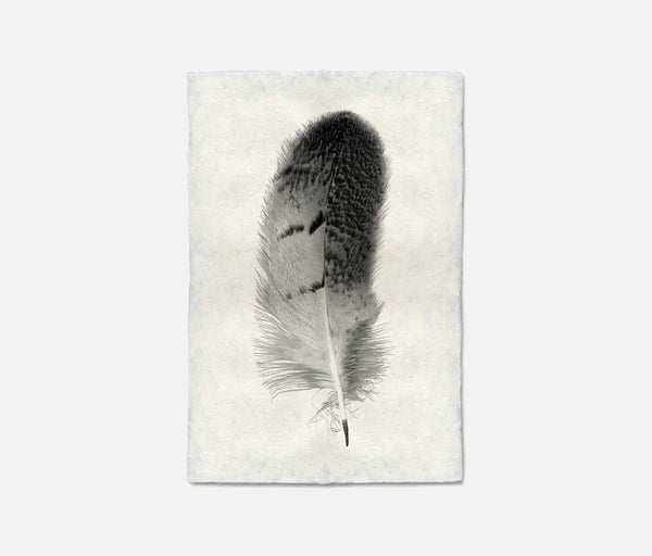Feather Wall Art