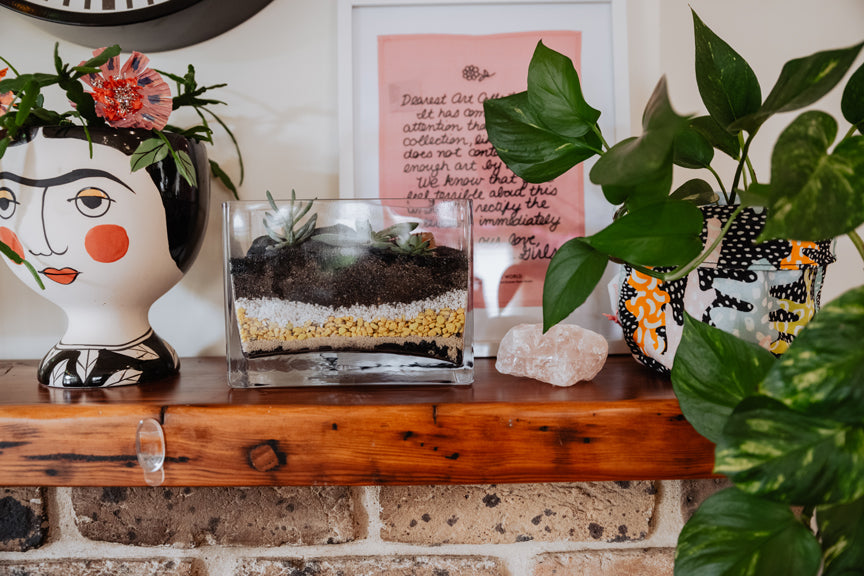 The Dirt on Terrariums