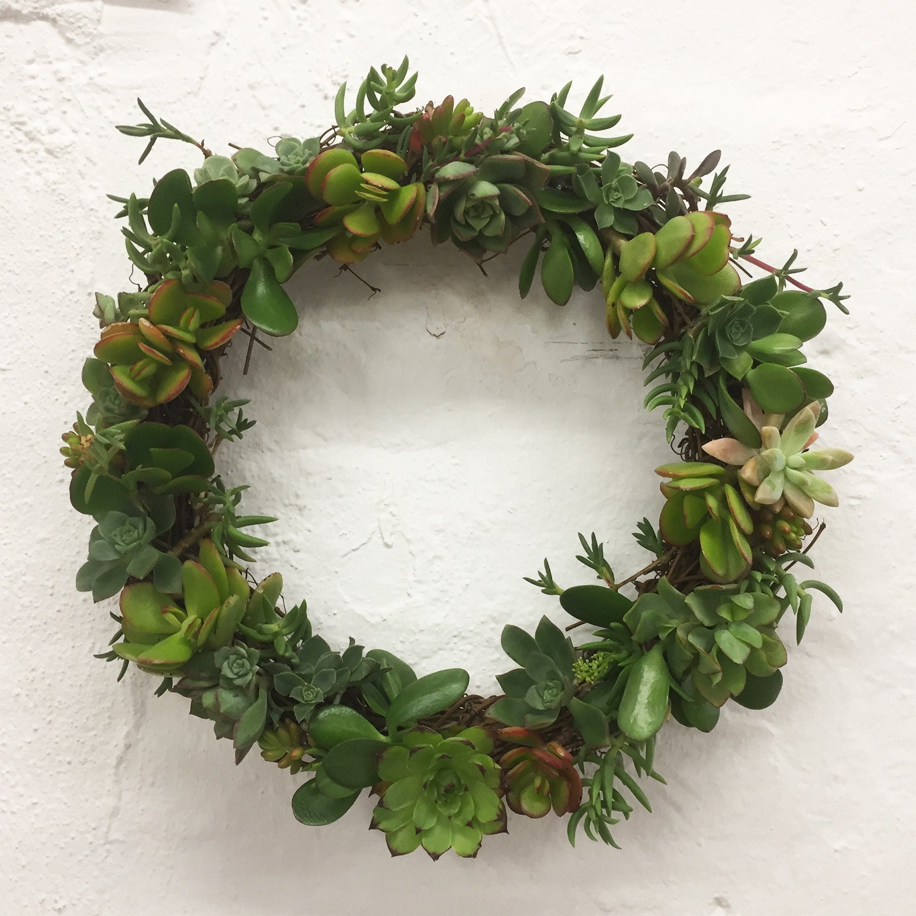 CHRISTMAS WREATH - SUCC A LOT