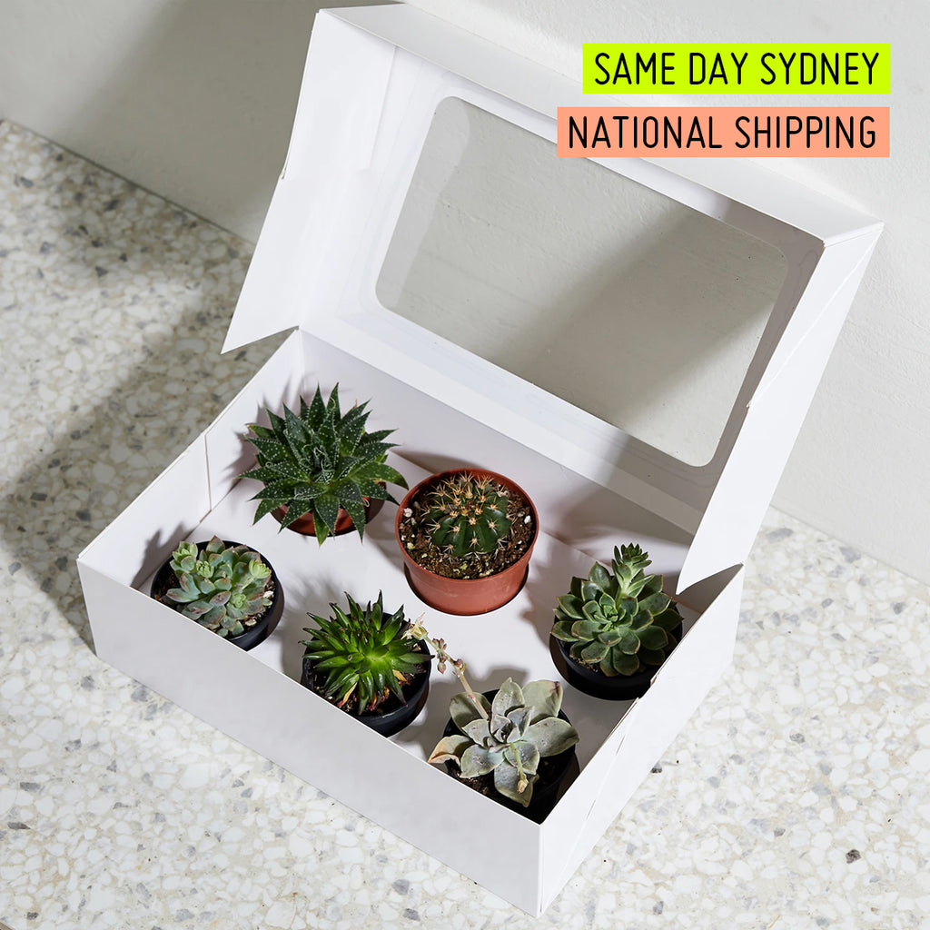 Online Succulent Variety Gift Box Delivery