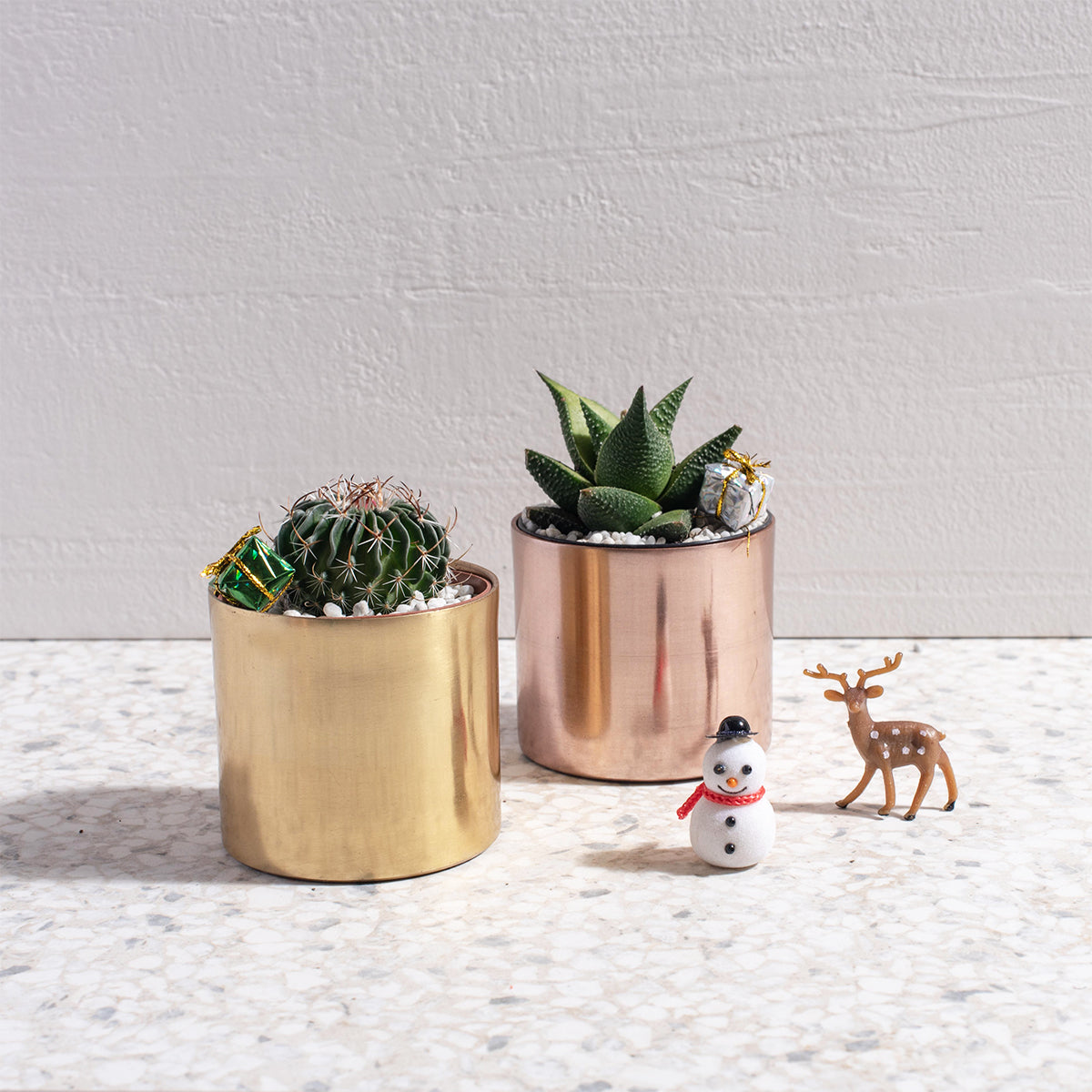 Christmas Pricks and Succs