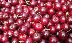Sweet Cherries Are Loaded with Antioxidants and Anti-inflammatory Agents