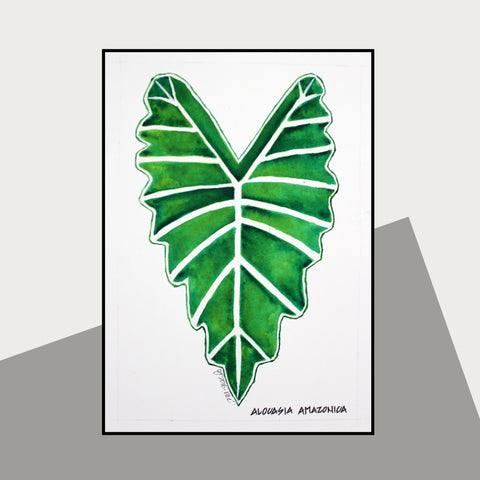 Alocasia Amazonica - Therapeutic Garden Sanctuary