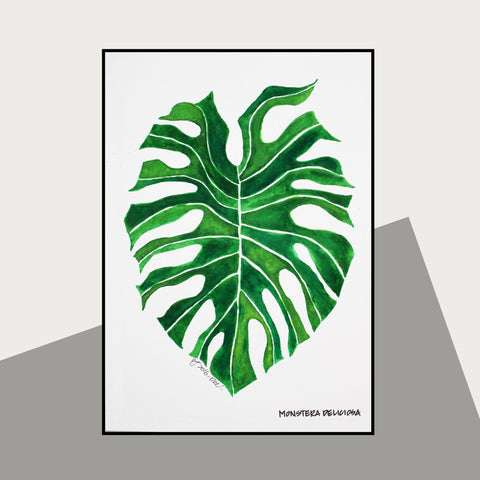 Monstera Deliciosa - Therapeutic Garden Sanctuary