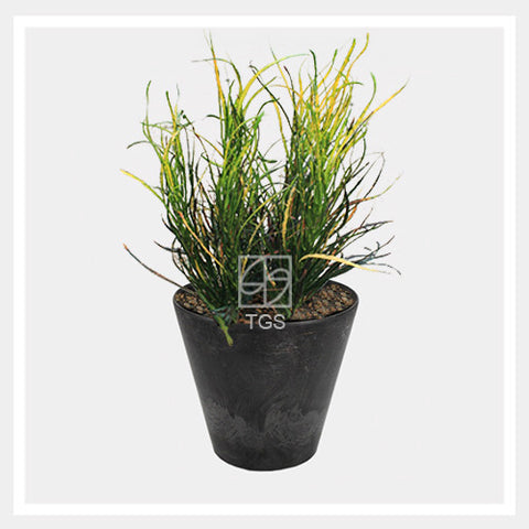 Codieaum variegatum in tabletop 17x15 black - Therapeutic Garden Sanctuary