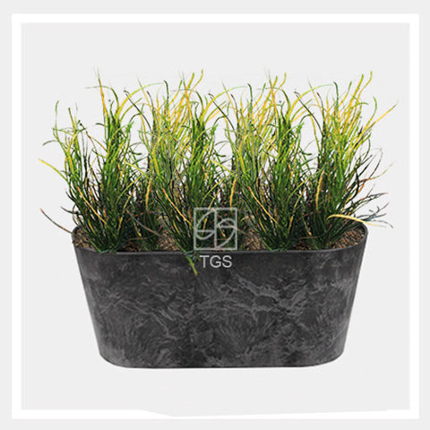 codieaum variegatum in balcony 38x16x17 black - Therapeutic Garden Sanctuary