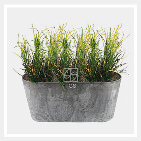 codieaum variegatum in balcony 38x16x17 grey - Therapeutic Garden Sanctuary