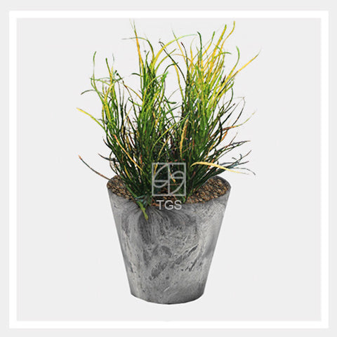 codieaum variegatum in tabletop 17x15 grey - Therapeutic Garden Sanctuary