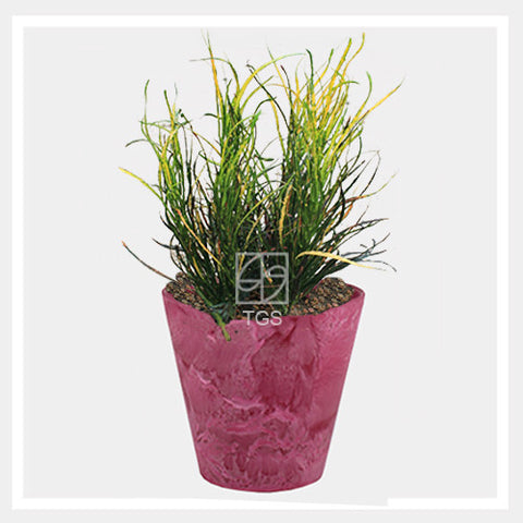 codieaum variegatum in tabletop 17x15 pink - Therapeutic Garden Sanctuary