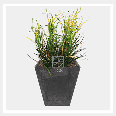 codieaum variegatum in tabletop square 15x15 black - Therapeutic Garden Sanctuary