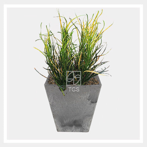 codieaum variegatum in tabletop square 15x15 grey - Therapeutic Garden Sanctuary