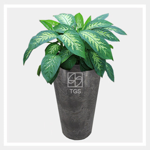 dieffenbachia 'tropic snow' in vase 28x49 black - Therapeutic Garden Sanctuary