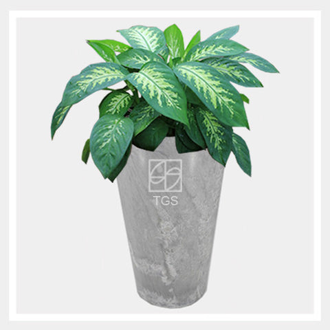 dieffenbachia 'tropic snow' in vase 28x49 grey - Therapeutic Garden Sanctuary